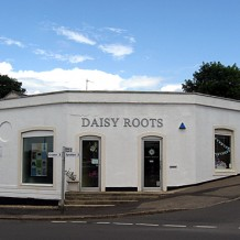 Another local success story - Daisy Roots